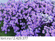 Клумба осенних цветов. Стоковое фото, фотограф Юрий Лебедев / Фотобанк Лори