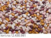 Купить «Фасоль», фото № 2430981, снято 26 марта 2011 г. (c) Лищук Руслан Викторович / Фотобанк Лори