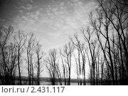Силуэты деревьев. Стоковое фото, фотограф Матвеев Артём / Фотобанк Лори