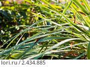 Трава с росой. Стоковое фото, фотограф Евдокимова Ольга / Фотобанк Лори