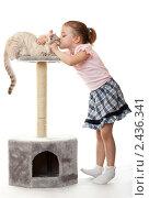 Купить «Девочка целует кота», фото № 2436341, снято 23 марта 2011 г. (c) Юлия Машкова / Фотобанк Лори