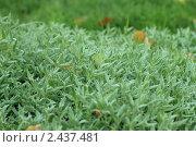 Роса на траве. Стоковое фото, фотограф Юрий Лебедев / Фотобанк Лори