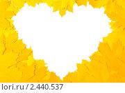 Желтый кленовые листья  в форме сердца. Стоковое фото, фотограф Виктория Кононова / Фотобанк Лори
