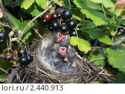 Маленькие птенцы. Стоковое фото, фотограф Шарипова Лилия / Фотобанк Лори