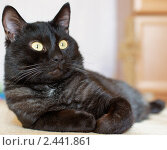 Кот. Стоковое фото, фотограф Дмитрий Макаревич / Фотобанк Лори