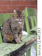 Красивый кот. Стоковое фото, фотограф Мальцев Дима / Фотобанк Лори