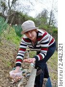 Купить «Женщина сажает лук-севок на зелень», эксклюзивное фото № 2442321, снято 2 апреля 2011 г. (c) Анна Мартынова / Фотобанк Лори