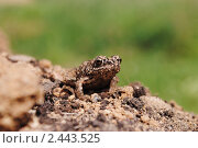 Лягушонок. Стоковое фото, фотограф Орлова Олеся / Фотобанк Лори