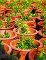 Растения в цветочных горшках, фото № 2444825, снято 26 ноября 2010 г. (c) Коваль Василий / Фотобанк Лори