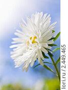 Купить «Цветок астры на фоне неба», фото № 2449465, снято 3 сентября 2010 г. (c) LenaLeonovich / Фотобанк Лори