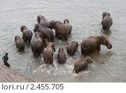 Слоны купаются. Стоковое фото, фотограф Мария Кузнецова / Фотобанк Лори