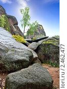 Купить «Заповедник «Столбы»», фото № 2462477, снято 5 сентября 2008 г. (c) Parmenov Pavel / Фотобанк Лори