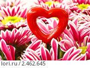 Купить «Сердце в цветах», фото № 2462645, снято 11 апреля 2011 г. (c) Peredniankina / Фотобанк Лори