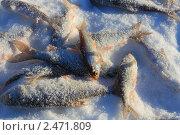 Купить «Свежая рыбка», эксклюзивное фото № 2471809, снято 15 января 2011 г. (c) Анатолий Матвейчук / Фотобанк Лори