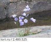 Каменный цветок. Стоковое фото, фотограф Екатерина Черняева / Фотобанк Лори