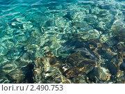 Восхитительная морская вода. Стоковое фото, фотограф Мария Исаченко / Фотобанк Лори