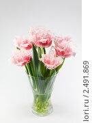 Махровые бело-розовые тюльпаны в вазе. Стоковое фото, фотограф Наталья Волкова / Фотобанк Лори