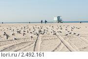 Купить «Тихий океан. Санта Моника. Лос-Анджелес. США», фото № 2492161, снято 14 апреля 2011 г. (c) Екатерина Овсянникова / Фотобанк Лори