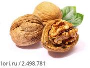 Купить «Грецкие орехи», фото № 2498781, снято 27 мая 2020 г. (c) Юдин Владимир / Фотобанк Лори