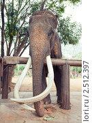 Купить «Слон», фото № 2512397, снято 9 марта 2011 г. (c) Виктор Застольский / Фотобанк Лори