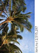 Филиппины. Остров Боракай. Пляж. Пальмы (2010 год). Стоковое фото, фотограф Татьяна Четвертакова / Фотобанк Лори
