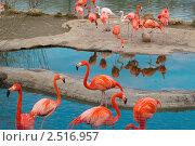 Купить «Фламинго в зоопарке», фото № 2516957, снято 30 апреля 2011 г. (c) Чередниченко Ольга / Фотобанк Лори