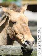 Лошадь. Стоковое фото, фотограф Андрей Бойко / Фотобанк Лори
