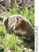 Кошка в траве. Стоковое фото, фотограф Байчихина Наталья / Фотобанк Лори