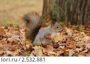 Купить «Белка в парке», фото № 2532881, снято 31 октября 2010 г. (c) Дмитрий Фомин / Фотобанк Лори