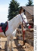 Лошадь в загоне. Стоковое фото, фотограф Байчихина Наталья / Фотобанк Лори