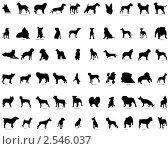Купить «Силуэты собак», иллюстрация № 2546037 (c) Павел Коновалов / Фотобанк Лори