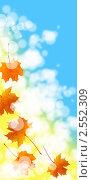 Купить «Кленовые листья», иллюстрация № 2552309 (c) Елена Блохина / Фотобанк Лори