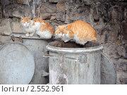 Купить «Две бездомные кошки на мусорных контейнерах», фото № 2552961, снято 26 февраля 2011 г. (c) Victor Spacewalker / Фотобанк Лори
