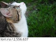 Красивый кот гуляет на фоне травы. Стоковое фото, фотограф Евгений Никитин / Фотобанк Лори