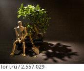 Купить «Посадить дерево», фото № 2557029, снято 11 апреля 2010 г. (c) Andreas Neufeld / Фотобанк Лори