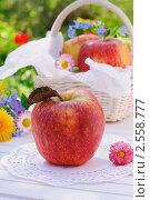 Купить «Дачный натюрморт - красные яблоки на белом столе в летний день», фото № 2558777, снято 22 мая 2011 г. (c) Светлана Зарецкая / Фотобанк Лори