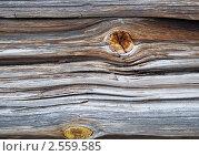 Купить «Бревно.Фактура старого дерева.», фото № 2559585, снято 18 апреля 2011 г. (c) Елена Писклова / Фотобанк Лори