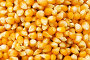 Зерна кукурузы, фон, фото № 2561197, снято 20 января 2009 г. (c) Elnur / Фотобанк Лори