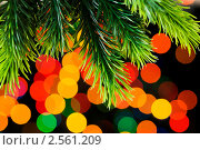 Купить «Еловая ветвь на фоне разноцветных огней», фото № 2561209, снято 23 сентября 2009 г. (c) Elnur / Фотобанк Лори