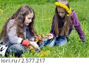 Купить «Две девочки подружки на зелёной лужайке плетут венки из желтых одуванчиков», фото № 2577217, снято 2 июня 2011 г. (c) RedTC / Фотобанк Лори