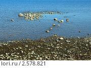 Финский залив, камни. Стоковое фото, фотограф Дмитрий Моисеевских / Фотобанк Лори