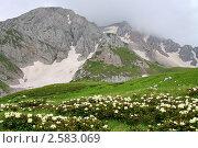 Цветущие рододендроны, Кавказ. Стоковое фото, фотограф Валерий Шевяков / Фотобанк Лори