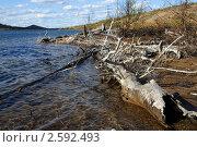 Купить «Берег озера Сопчъявр», фото № 2592493, снято 31 мая 2011 г. (c) Валерий Александрович / Фотобанк Лори