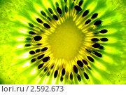 Купить «Ломтик киви крупно», фото № 2592673, снято 24 мая 2020 г. (c) Василий Повольнов / Фотобанк Лори