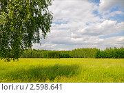 Лето (2011 год). Стоковое фото, фотограф Алла Вовнянко / Фотобанк Лори