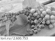 Виноград. Черно-белое фото. Стоковое фото, фотограф Гаврикова Ольга / Фотобанк Лори