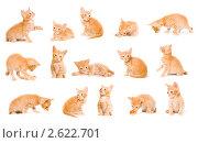 Купить «Рыжий котенок в разных позах», фото № 2622701, снято 21 ноября 2019 г. (c) Типляшина Евгения / Фотобанк Лори