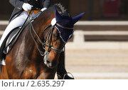 Купить «Выездка: портрет гнедой лошади», фото № 2635297, снято 1 июля 2011 г. (c) Абрамова Ксения / Фотобанк Лори