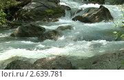 Купить «Река в лесу», видеоролик № 2639781, снято 1 мая 2010 г. (c) Алексей Кузнецов / Фотобанк Лори
