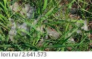Купить «Талый снег на траве», видеоролик № 2641573, снято 10 мая 2011 г. (c) Михаил Коханчиков / Фотобанк Лори